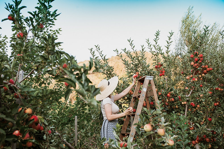 Pick Your Own Organic Apples