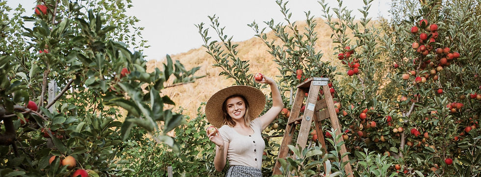 Girl on a ladder picking red apples