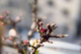 andy-tang-9kpckWPb5Vk-unsplash_edited.jp