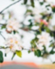 blossoms 1.jpg