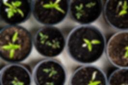 seed starters.jpg
