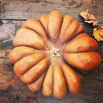 pumpkin%20on%20board_edited.jpg