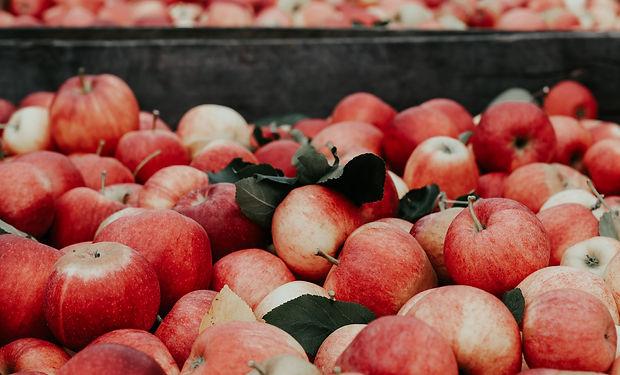 barrel of apples .jpg
