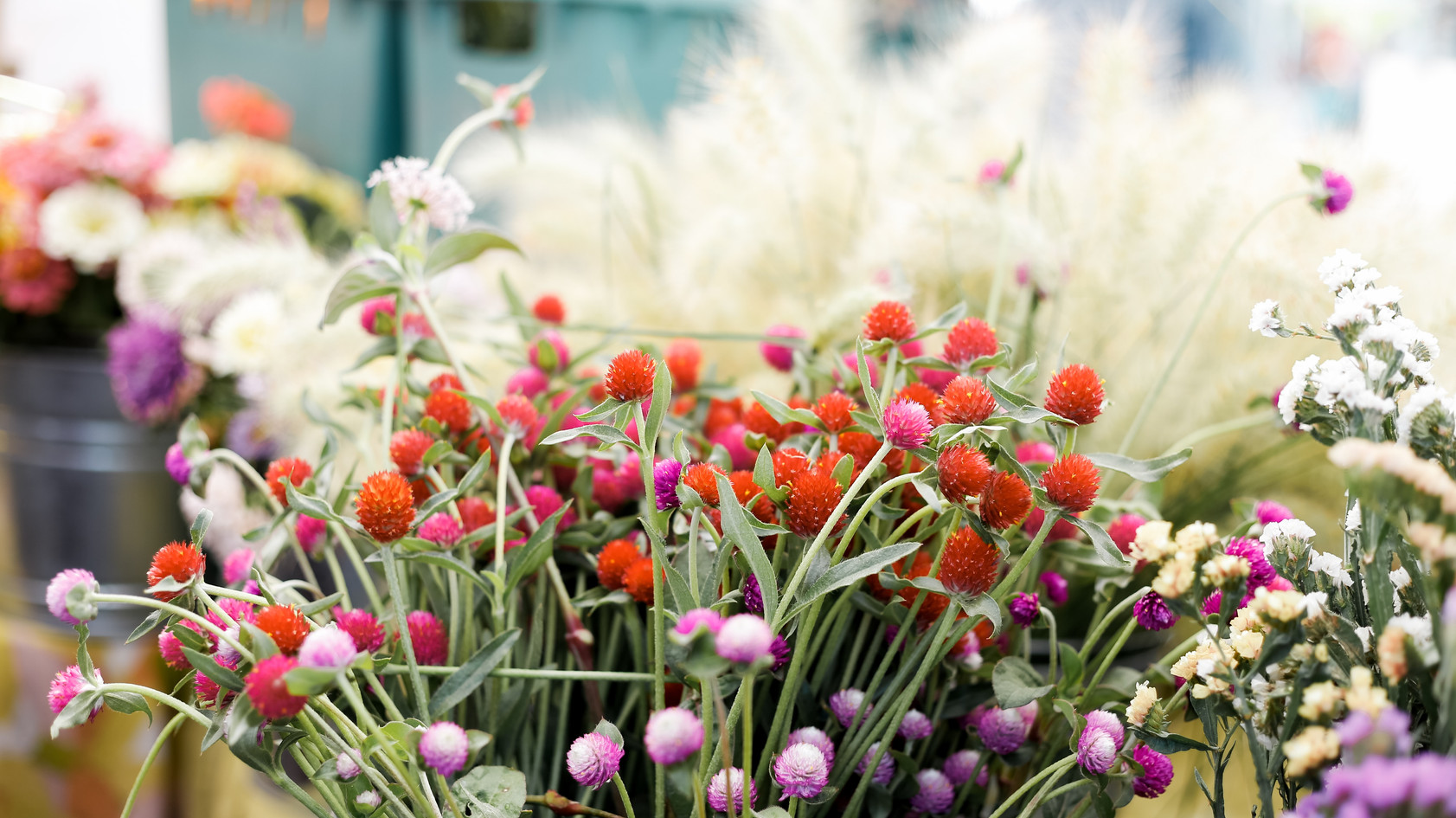 farm flowers