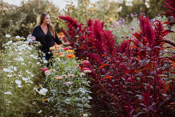 Faith in the flower fields of zinnias, amaranth, and cosmos