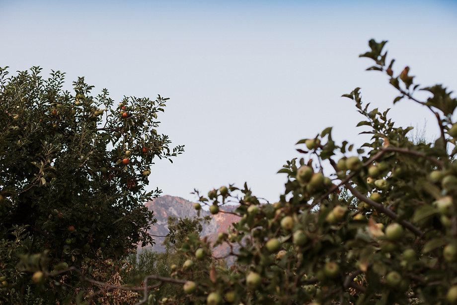Oak Glen Sky and apple orchard