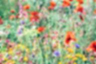 wildflowers%20_edited.jpg