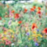 flower fields at Stone Soup Farm
