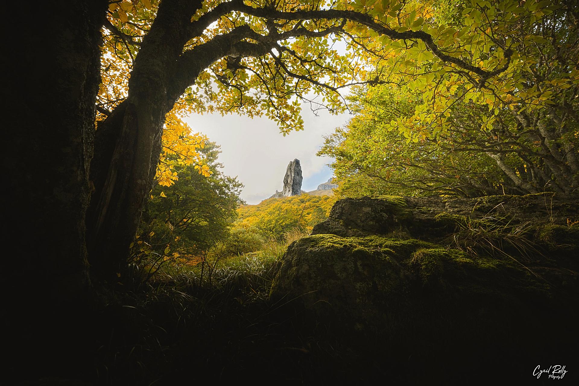 Prehistoric Forest