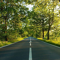 Road amidst a row of trees