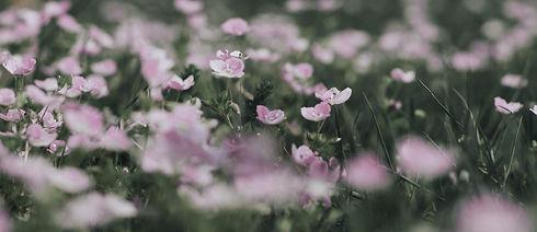 bearb_DSC_3143_blumen-lila.jpg