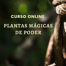 curso_plantas_mágicas_de_poder.png