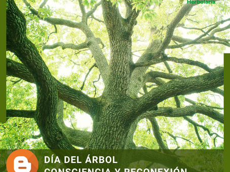 Día del Árbol: consciencia y conexión