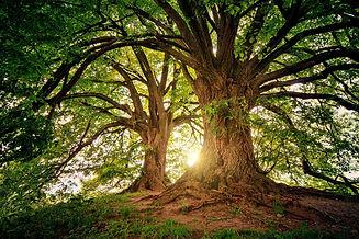 tree-3822149_1920.jpg