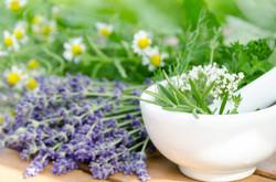 Cursos de Plantas Medicinales