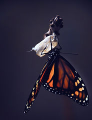 butterfly-1518060_1920 editado.jpg