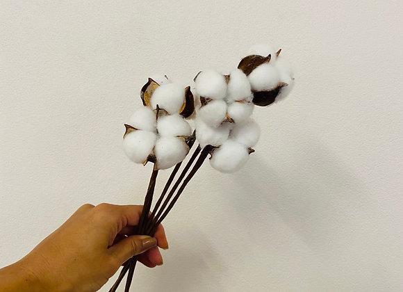Cotton (5/10 stems )