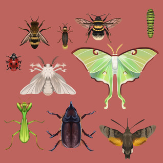 Insects_Part_1.jpg