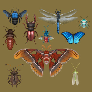 Insects_Part_2.jpg