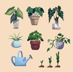 Zimmerpflanzen Illustrationen