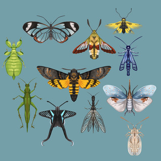Insects_Part_3.jpg