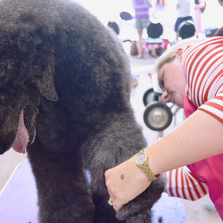 At a grooming competition