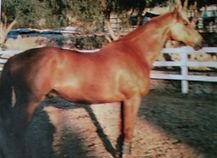 Diana Moore War Horse.jpg