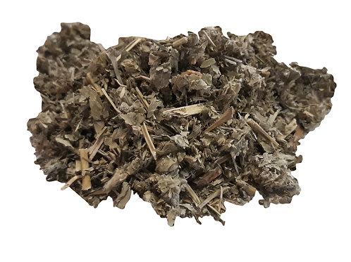 Lady's mantle herb