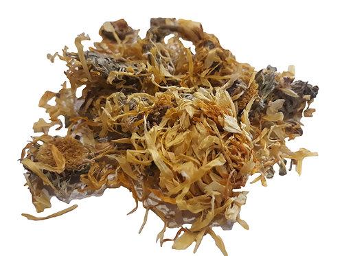 Calendula (Marigold) flower