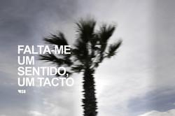 FALTAME PALMS PANO