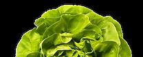 lettuce_website.png