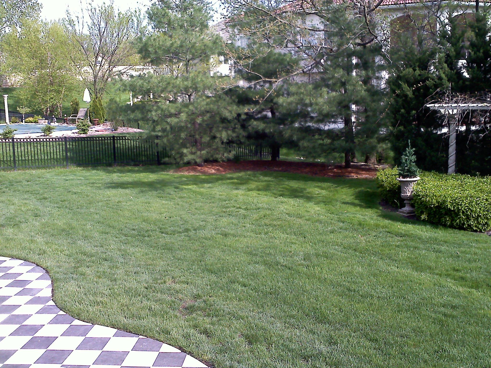 #11 before Side yard and Back corner