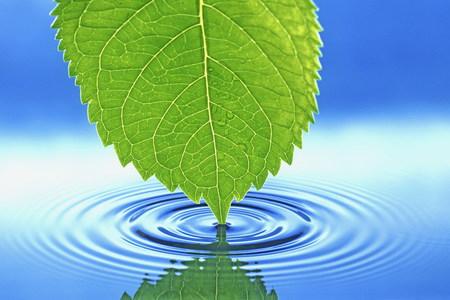 Thirsty Leaf