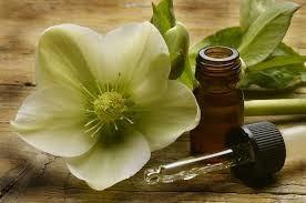 Terapias com as essências Florais de Bach