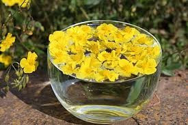 florais de Bach - Castellani Terapia Holística no ABC