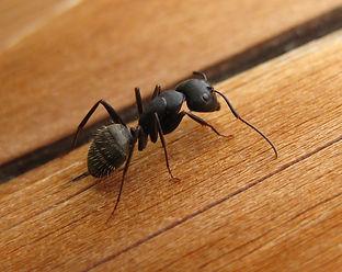ant-close-2.jpg