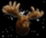 Moose-Head-SMaller-Shadow.png