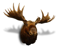 Moose-Head-SMaller-Shadow.png