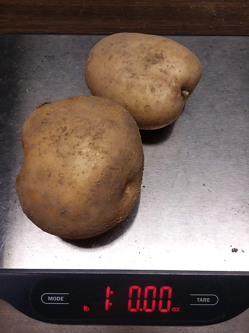 ELBA WHITE POTATO-1 lb