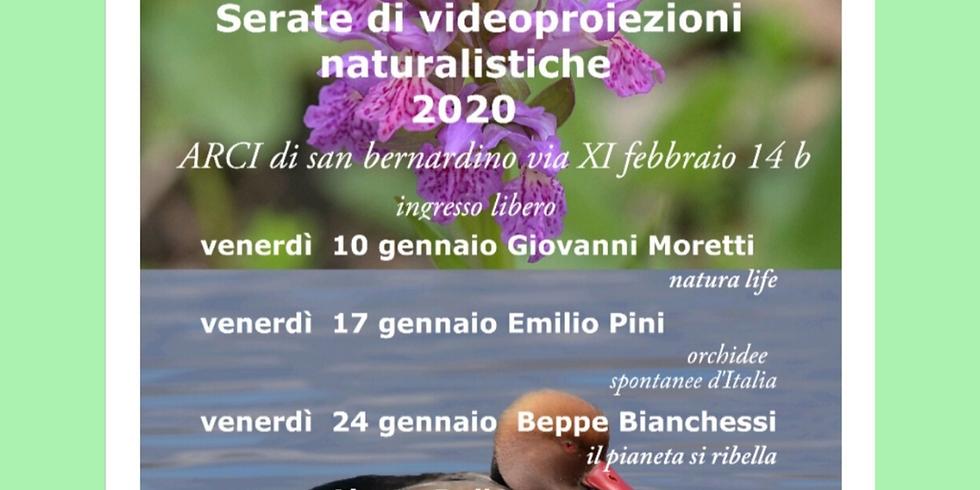 NATURA 2020