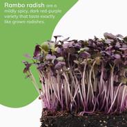 rambo 1.jpg