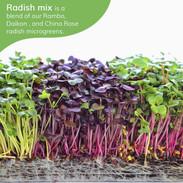 radish mix 1.jpg
