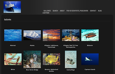 carlos website.png