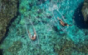 kayak transparent , kayak guadeloupe, activite de mer