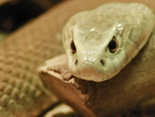 Snakes: Harmless or Not?