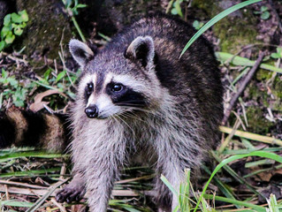 Is There An Animal Living On Your Property