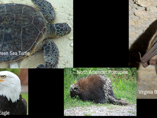 Endangered, Rare, Threaten Animals in MD and VA