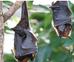 Befriend A Bat