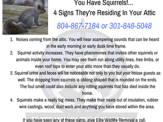 Signs Squirrels May Be In Your Attic