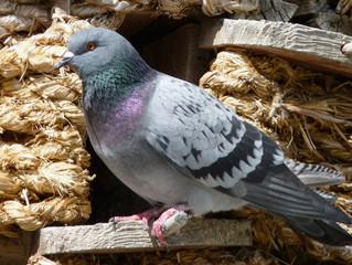 Bird Watching Will Turn Into Shewing  Away Birds